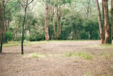 Picture of / about 'Taponga River' Victoria - Taponga River Camp Ground