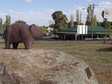 Picture relating to Wombat - titled 'Wombat on his rock 2'