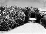 Picture relating to Forrest - titled 'Picturesque driveway entrance to 72, 74 Franklin Street, Forrest.'