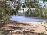 Picture relating to Cobram - titled 'Cobram State Forest - Tocumwal: Bretnalls Beach'