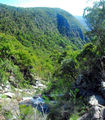 View from the top of Chaelundi Falls