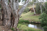 Picture relating to Werribee River - titled 'Werribee River'